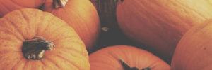 Fall Fun Series | Plethora of Pumpkin