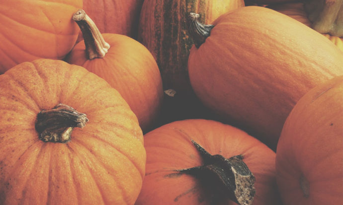 Fall Fun Series | Plethora of Pumpkin